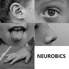 five senses for neurobics 1